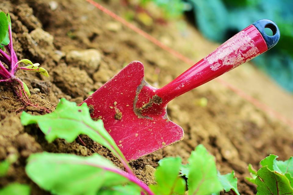 Guide de travaux de jardinage d'automne