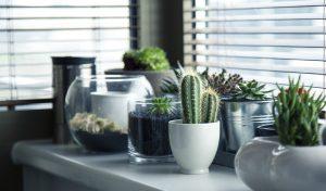 Vivre avec des plantes : les astuces !