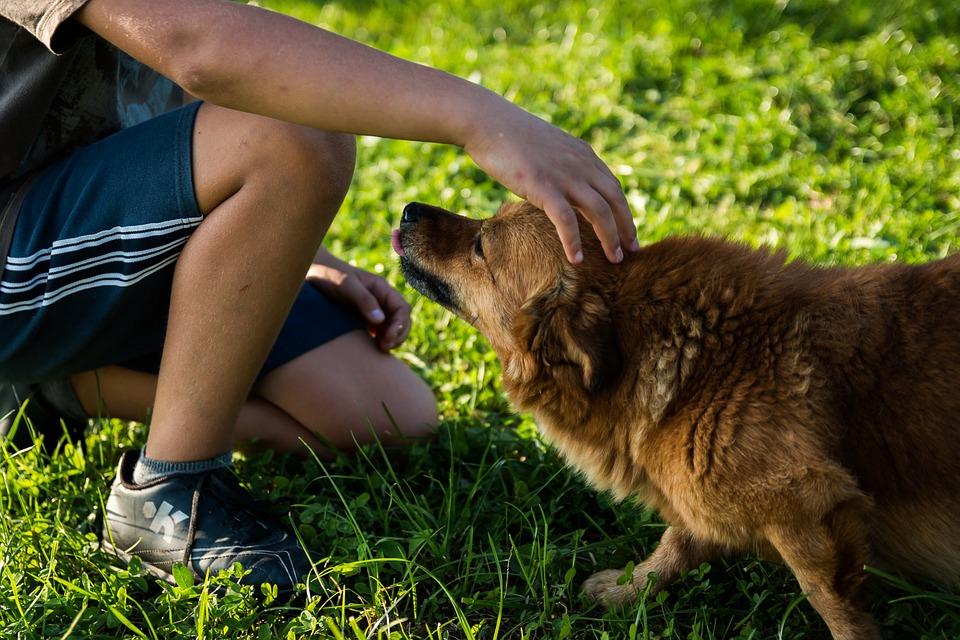 Comment bien comprendre le comportement du chien ?