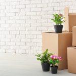 Comment transporter des fleurs et ne pas endommager les plantes d'intérieur lors du déménagement