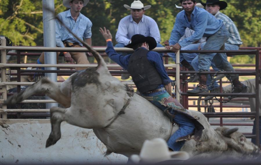 un cow-boy sur un taureau en furie