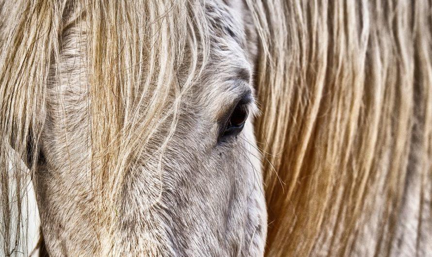 L'utilité de la tondeuse professionnelle pour cheval